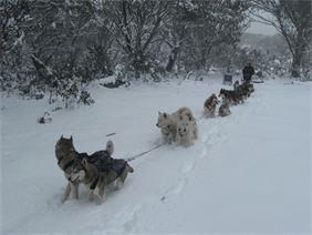 Howling Husky Sled Dog Tours - Mt Baw Baw