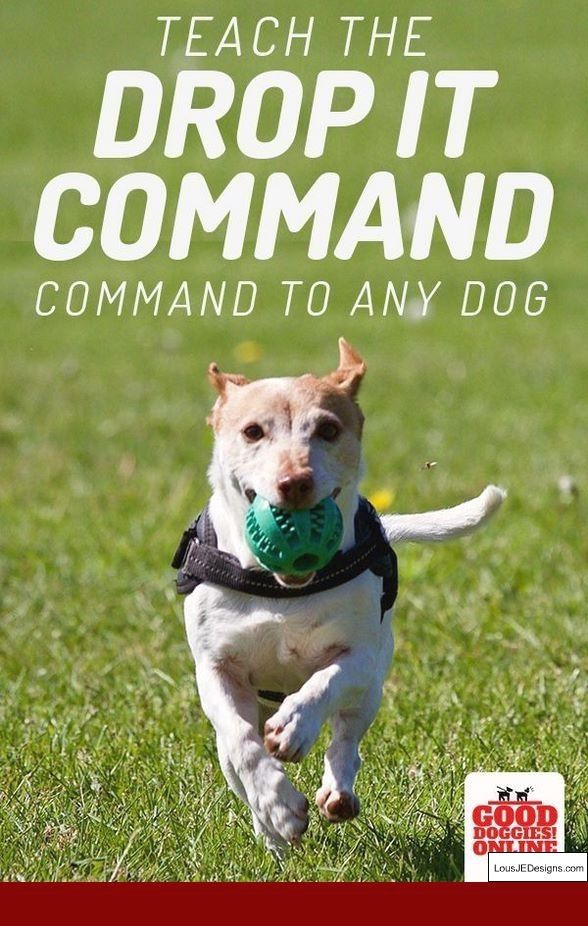Dog Training Tips Hindi And Pics Of How To Train Your Dog To Walk