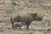 Save the Rhino Trust Namibia - African Rhino Programmes - Save the Rhino