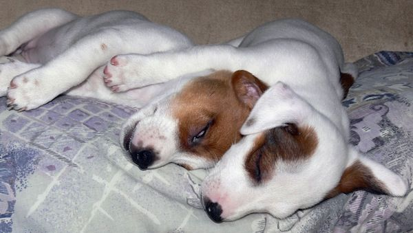 Emilia, Lombardia e Toscana: 20 indagati per traffico di cuccioli dall'Est