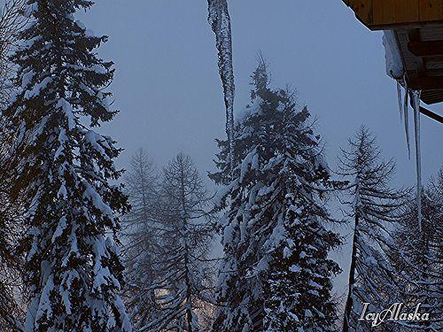 Album di Alaska Icy