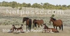 Report NR002329 - STOLEN/MISSING Jack Black Band of Mustang - CO
