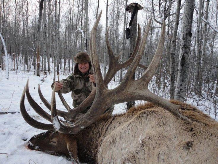 hunting guide  elk hunting