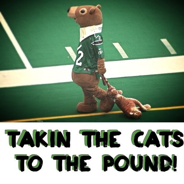 Saskatchewan Roughrider's Gainer the Gopher taking the Hamilton Tigercats mascot to the pound! /=S=/