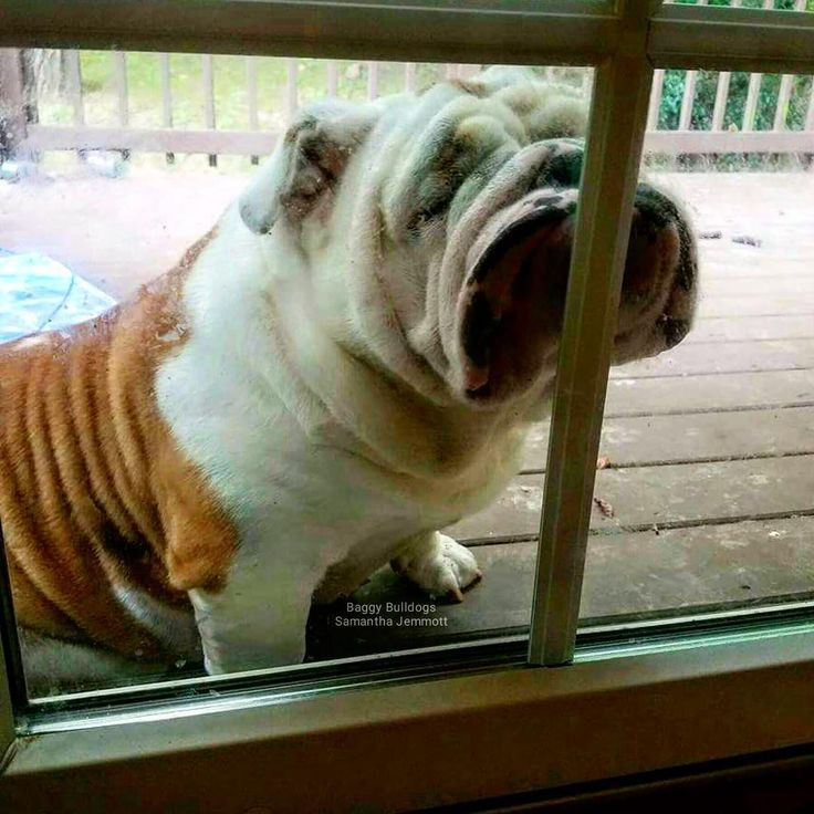 In.  I want I.  I have been outside a good 90 seconds!