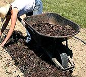 Mulch 101: How To Mulch Around Plants Properly