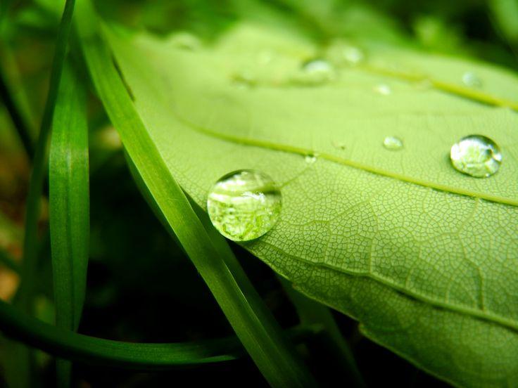 #drop #water #leaf
