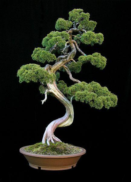 http://www.bonsai-fachforum.de/weblogs/upload/13/15080298814719a4fadcc7b.jpg