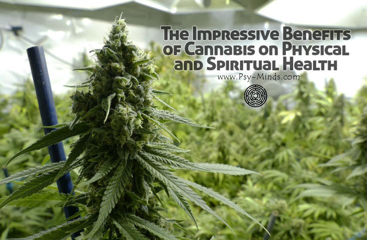 The Impressive Benefits of Cannabis on Physical and Spiritual Health - @psyminds17