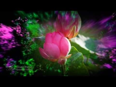 GIOVANNI MARRADI - Quietude Forever(Relaxing,soothing music) - YouTube