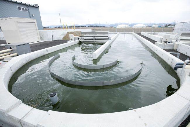 http://www.amamoba.com/mibunrui/mo-oil.html 世紀の大発見が2010年12月報道され、TV番組「夢の扉」では研究施設が沖縄だったと記憶があり心強かったのですが、米軍横須賀基地から326kmですから日本政府も真剣に考えなくては。福島の土着藻を生産に使っているとは知らなかったです。 →  南相馬の土着藻類が日本を産油国へ導く?——藻類バイオマスエネルギーの可能性(前編) | あしたのコミュニティーラボ 福島県南相馬市で土着の微細藻類からオイルを抽出する研究プロジェクトが佳境を迎えている。コンソーシアムには80社の企業が参画し、持続可能で新しい再生エネルギーの産業化に期待を寄せる。近い将来、私たち生活者にも身近なエネルギー源となり得るのだろうか。研究を主導する筑波大学の渡邉信教授に、藻類バイオマスのポテンシャルについて伺った。南相馬の研究開発拠点にある培養池の1つ
