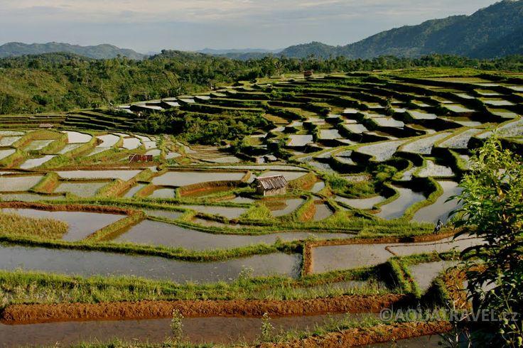 Terasy rýžových polí po Rutengem, cestou od jeskyně Liangbua