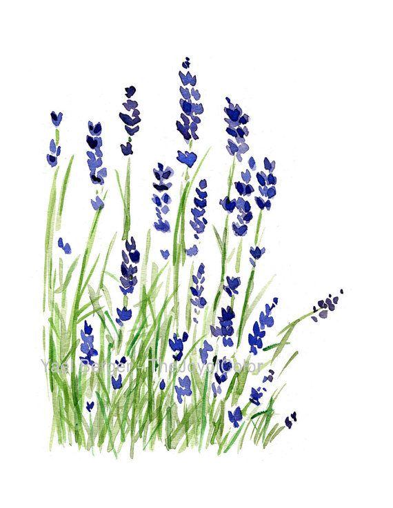 Lavender plans art print, Lavender watercolor print, Purple lavender, Plants, Botanical herb, February birthday, mothers day