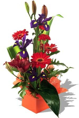 Jester    Playful, colourful and captivating are great words to describe this perky arrangement. Containing bright red Gerberas, Carnations, Asiatic Lilies and purple Iris you are sure to impress on the lucky person to receive this arrangement! $55.08