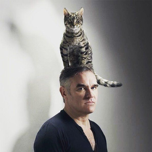 News about Morrissey on Twitter