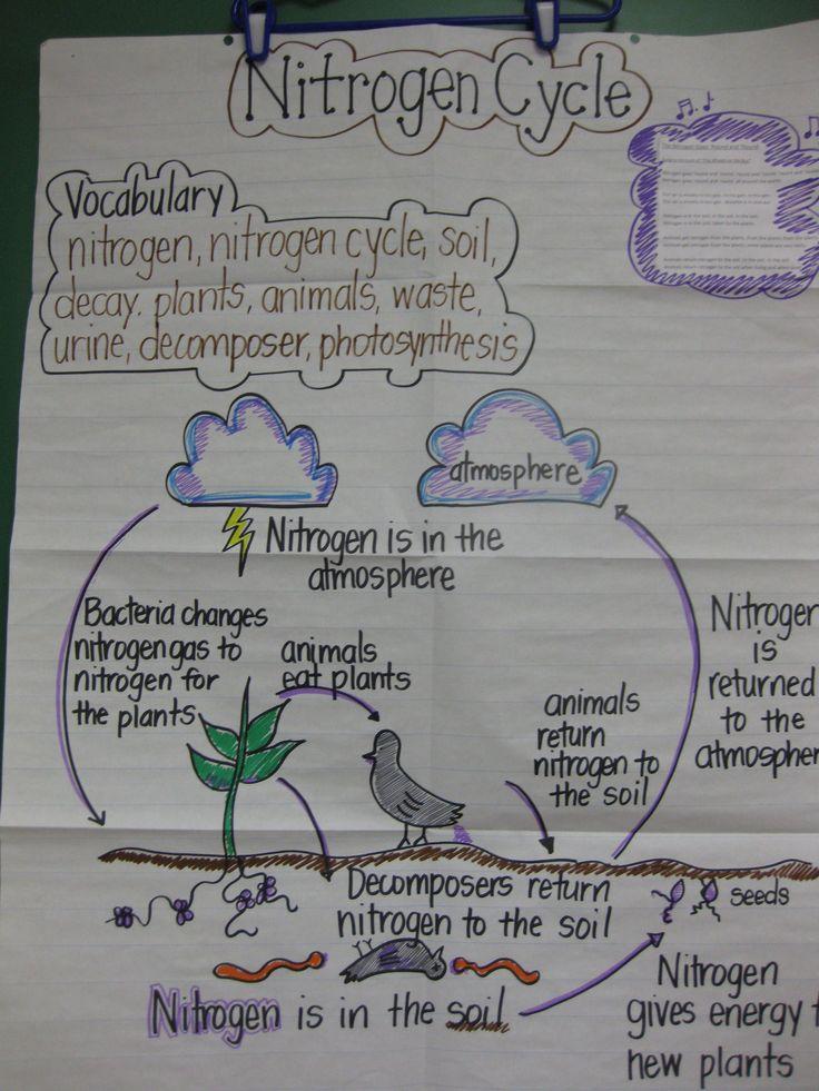 ReadablePrime Biogeochemical Cycles Worksheet