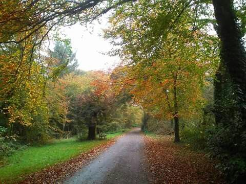 #November in #Glenbower Woods, Killeagh