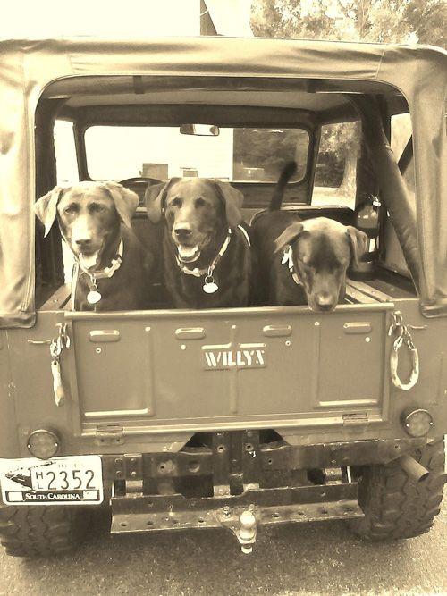 Pensez à la bâche de coffre pour transporter vos chiens sans salir l'intérieur…