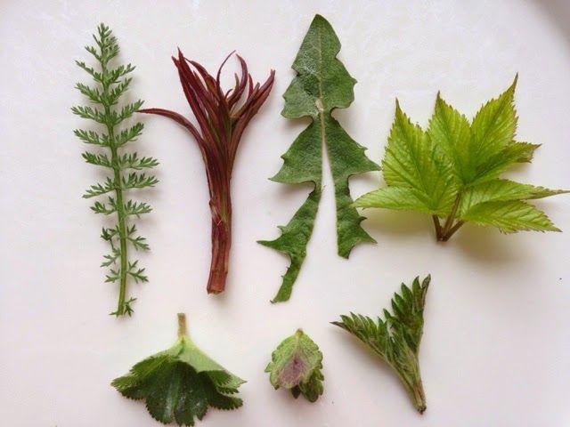 Päivän villivihannekset lautasella poseeraamassa tunnistusta varten. Löytyykö nyt tuttuja kasveja?