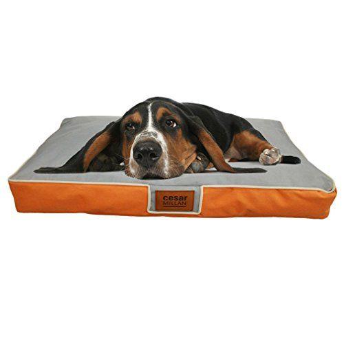 8475 Best Dog Beds Images On Pinterest Dog Beds Cat