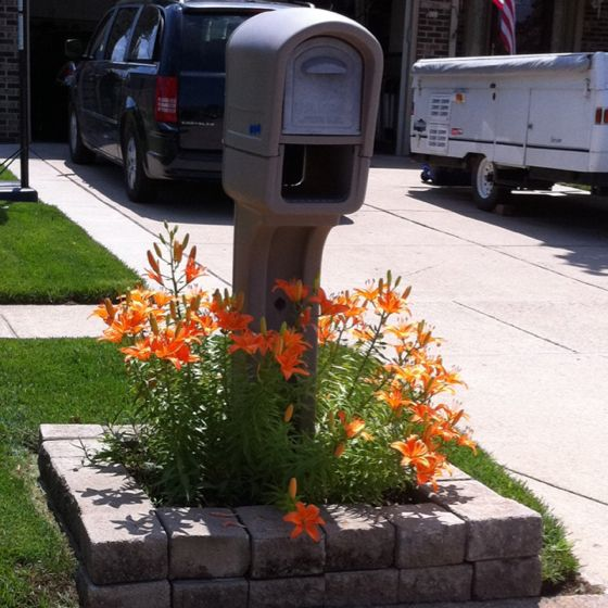 Garden Ideas Around Mailbox 490 best landscape/architecture images on pinterest | landscaping