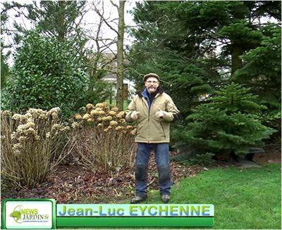 L'expert es-taille de NewsJardinTV, Jean-Luc Eychenne, paysagiste de profession, montre avec la plus grande précision comment bien tailler un gros buisson d'hortensia (Hydrangea macrophylla).