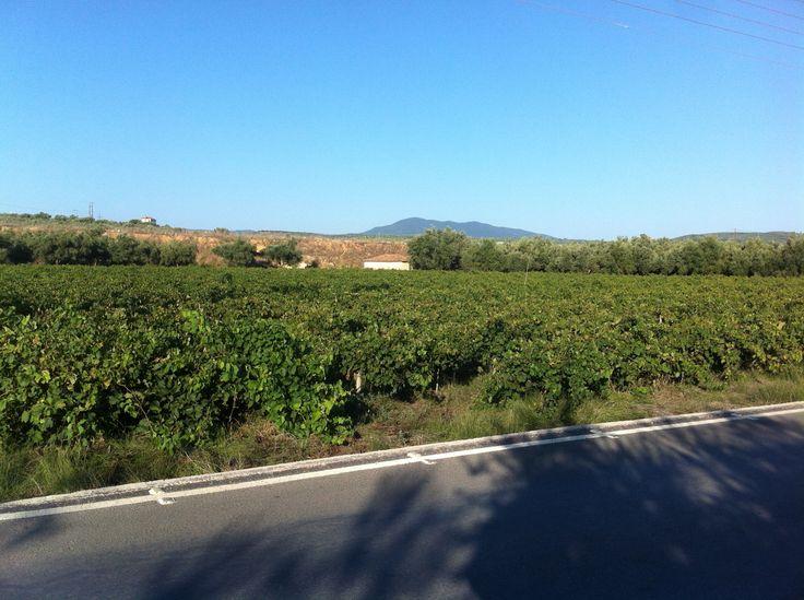 Running through the vineyards