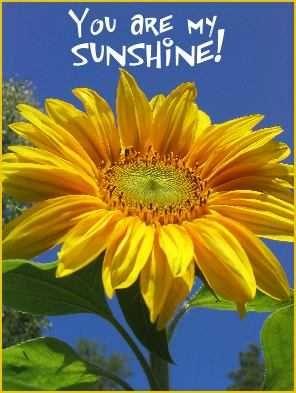 Sunflowers, you are my sunshine #fieldforhope
