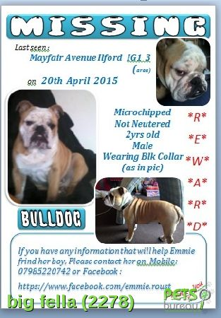 Please help us find Big Fella the Dog missing in the ig1 area. For more details click http://j.mp/1brxam0
