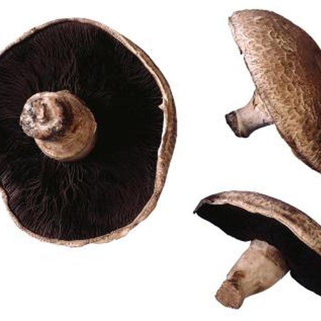 Portobello mushrooms have brown gills and produce brown spores.