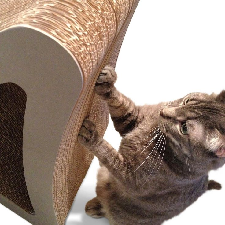 #Cat #Nail #Scratcher #Tower #Play #Toy #Kitten #Pet #Furniture Sofa #Protector #Nails #ebay
