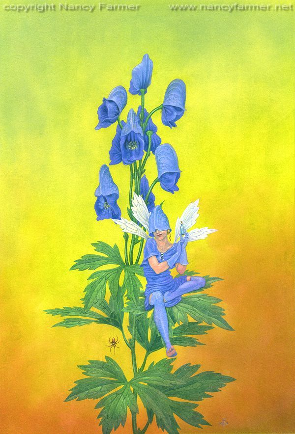 Aconitum Napellus, The Monkshood Fairy. NANCY FARMER is one of my favorite artists! Check her out: SHOP http://www.NancyFarmer.net | SHOP http://www.etsy.com/shop/nancyfarmer | FACEBOOK https://www.facebook.com/pages/Nancy-Farmer/22600840729 | BLOG http://nancyfarmer.wordpress.com