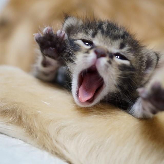 Animal Mascota » Consejos para el cuidado de tu mascota y animales domésticos: perros, gatos, pájaros, peces, roedores o reptiles. Conoce lo...