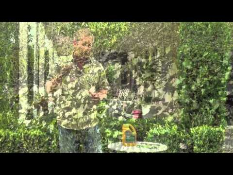 Learn how to control, prevent and remove weeds from your lawn!
