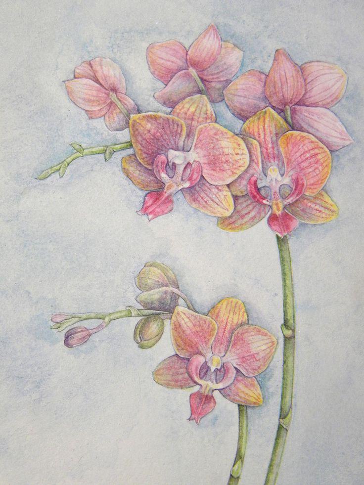 Mini Phalaenopsis Orchid, watercolor by Mireille Belajonas, 2014