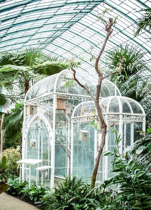 Aviary In A Greenhouse Buildaviary Aviariesideas Conservatorygreenhouse Plantas 2019 Gl House Gardening Garden