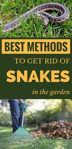 Best methods to get rid of snakes in the garden. | Snake Repellant ...