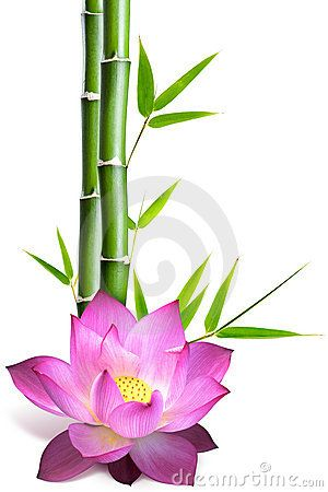 Bamboo and lotus flower by Juliengrondin, via Dreamstime