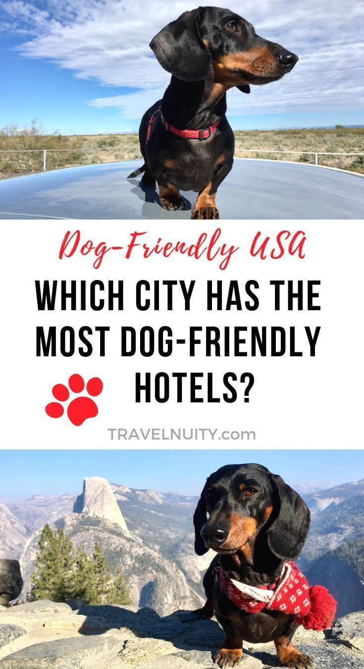 Which City Has The Most Pet Friendly Hotels In The Usa Travelnuity Pet Friendly Hotels Pet Friendly Vacations Dog Friendly Vacation