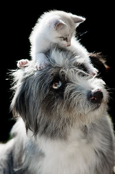 Dog & little kitty