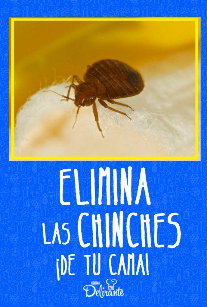 Como Acabar Con Las Chinches En Casa Despidete De Las Chinches De La Cama Con Este Remedio Casero