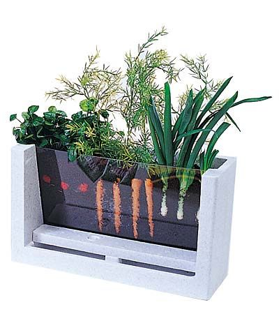 Watch your veggies grow!  (A great way to teach kids how vegetables grow)--and maybe an old fish tank could be used, too!