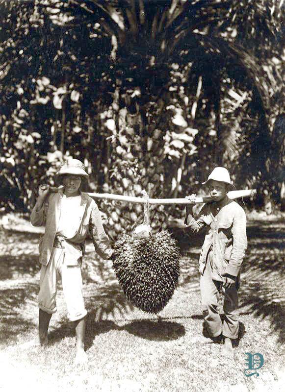 Kebun Sawit Jawa