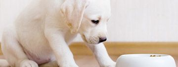 Auf schecker.de finden Sie eine große aus Auswahl an #Hundefutter für #Welpen  #hund #hunde #dogs #futter #pfoten #fellnase
