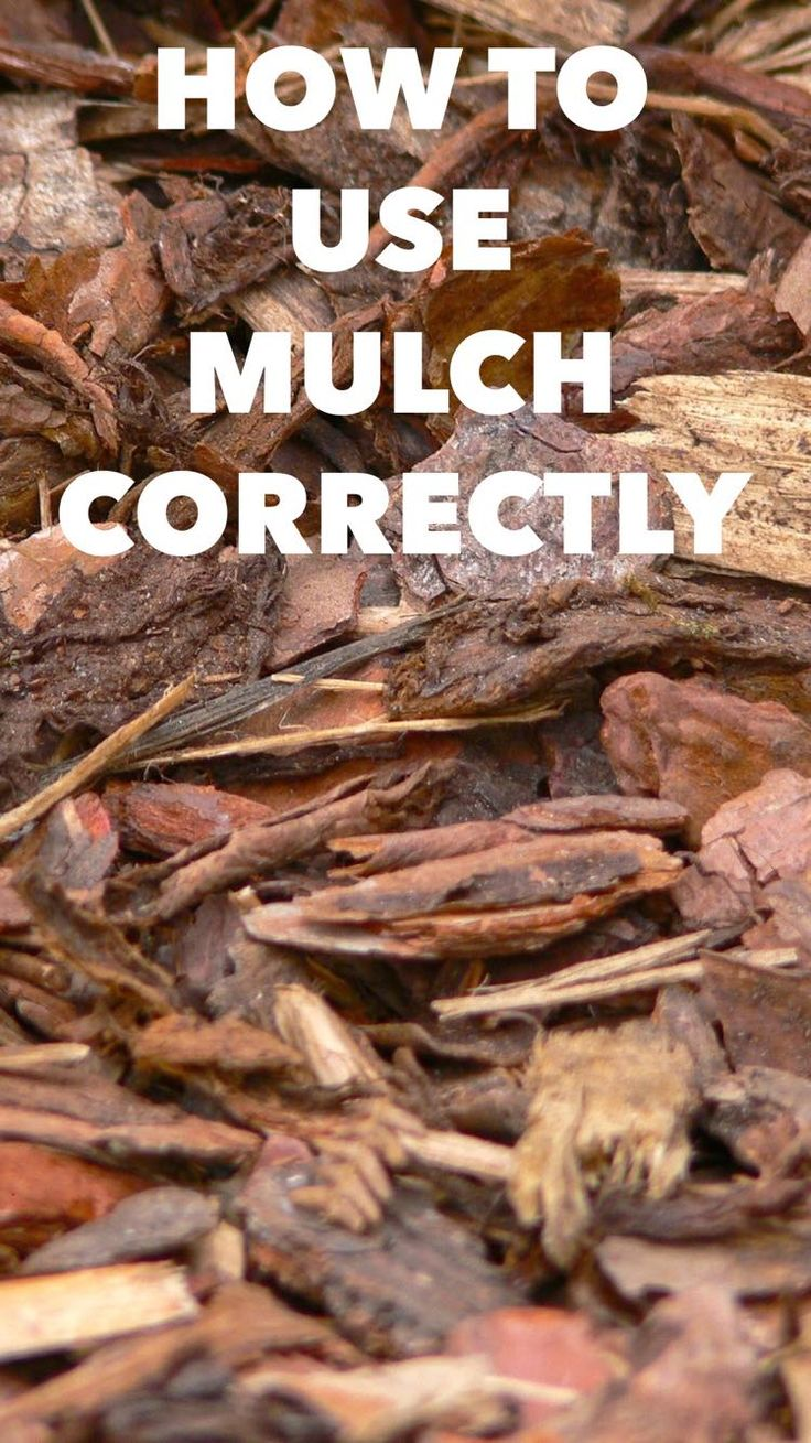 Learn how to mulch and which types of mulch you might want to use for your shrubs or garden. Mulching helps suppress weeds and reduces watering needs.