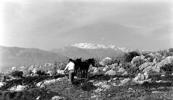 James Burke Ελλάδα 1959-1960.,