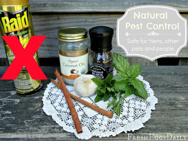 Natural Pest Control - Safe for Chickens, Other Pets and People