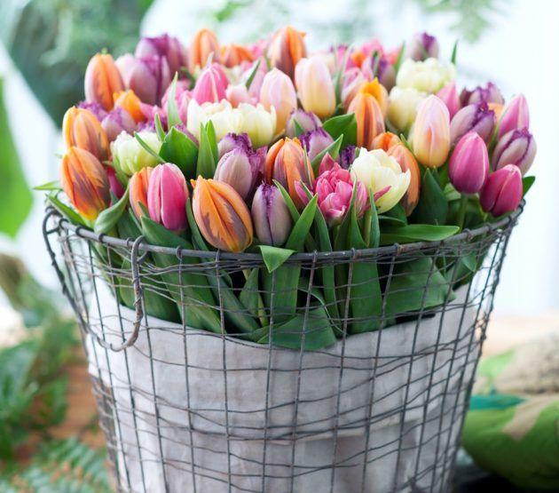 Dekorieren mit Tulpen * Bunter Blumenstrauß im Metallkorb von pflanzenfreude.de