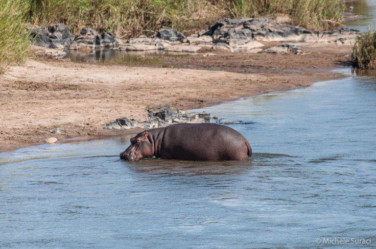 Kruger National Park - Sudafrica - Tappa 1 :http://www.iviaggidimichele.com/kruger-national-park-sudafrica-tappa-1/