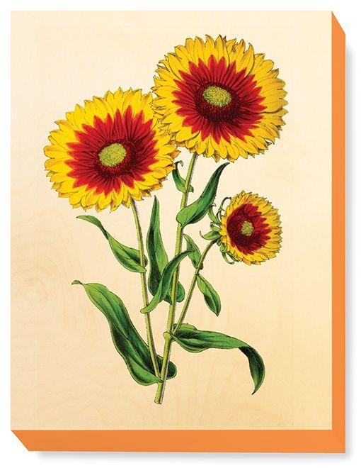 FLW 029 Vintage Flower illustration